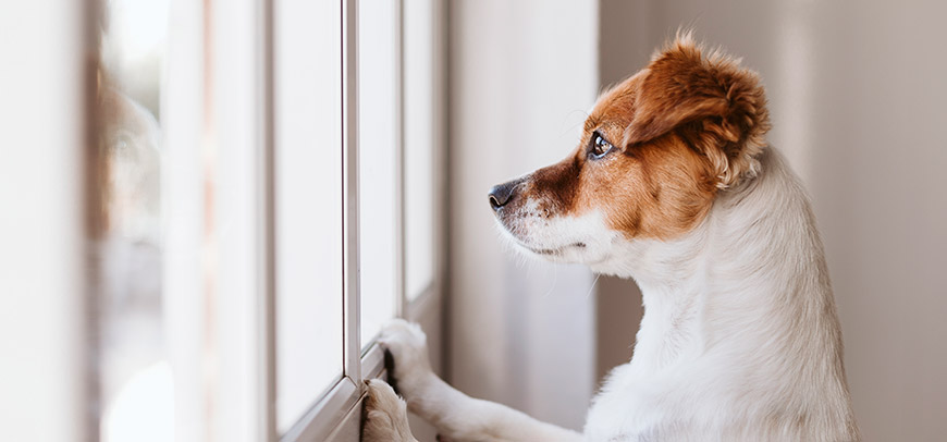 Separation Anxiety in Pets Queen Creek